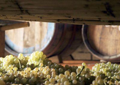 fattoria-piccaratico-vini-vinsanto-02